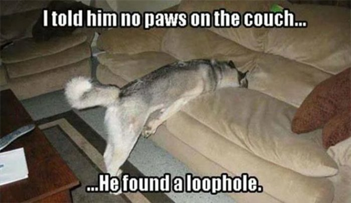 no-paws-on-the-couch